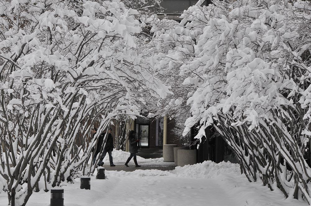 Archway of snow covered trees on the UIC campus